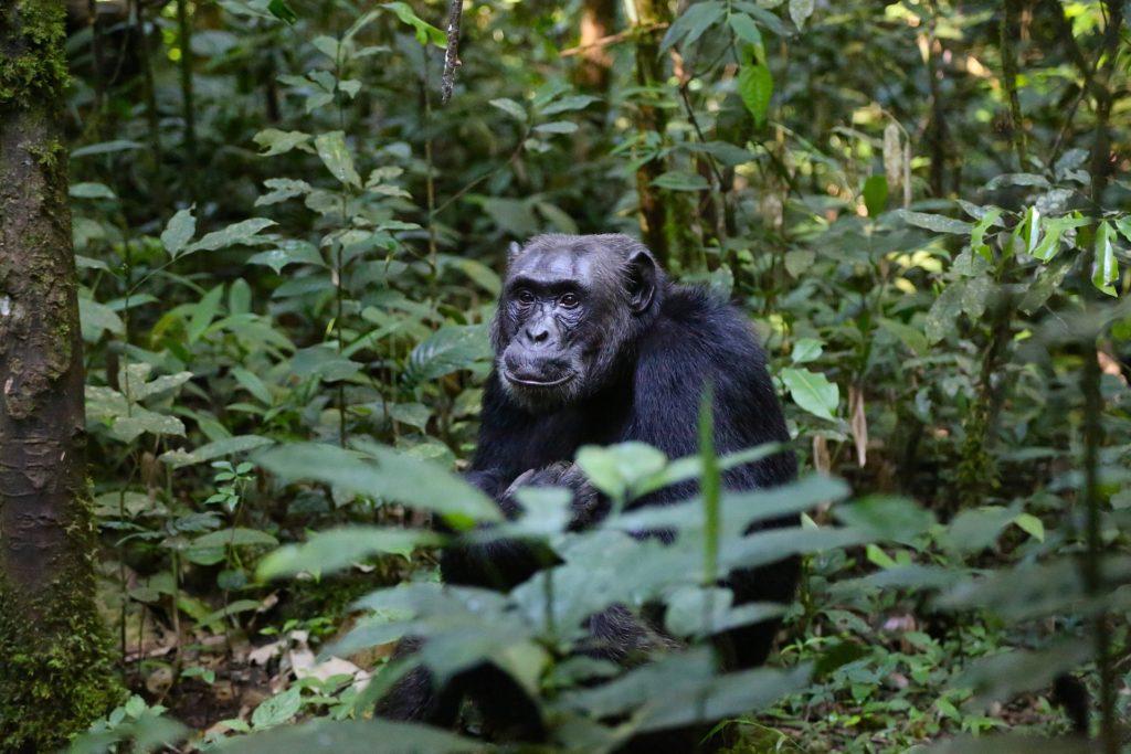 Ugandaanimales (3)